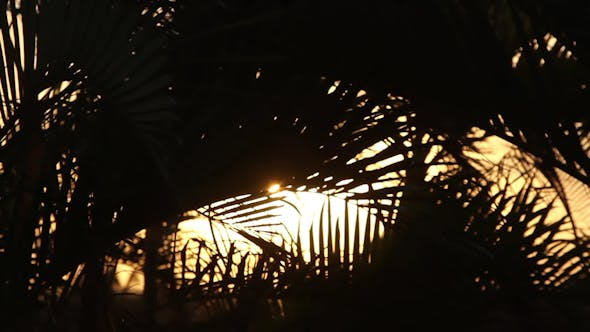 Thumbnail for Palm Trees Shilouette Sunset 12