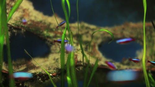 Fish Sealife Marine Aquarium Wildlife Underwater 24