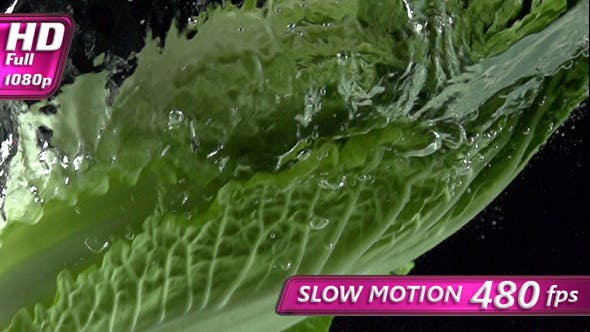 Thumbnail for Chinese Cabbage