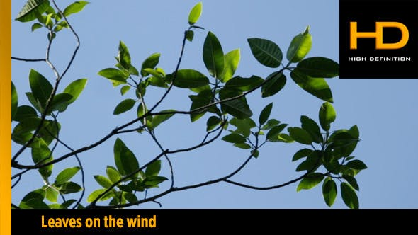 Thumbnail for Leaves on the wind