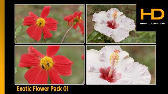 Thumbnail for Exotic Flower Pack 01