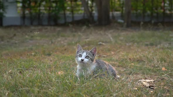 Cute Kitten Sitting In The Garden