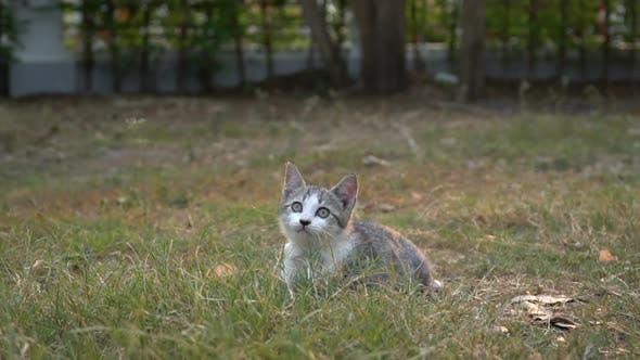 Cute Kitten Sitting In The Garden