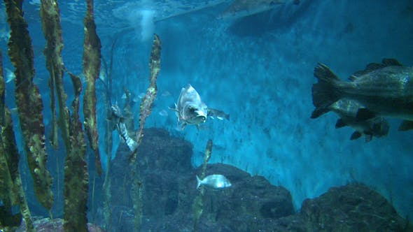 Thumbnail for Majestic Aquatic Life (12 Of 19)