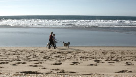 Thumbnail for Walk with Dogs