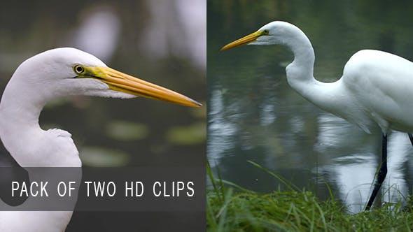 Thumbnail for Wildlife of Birds
