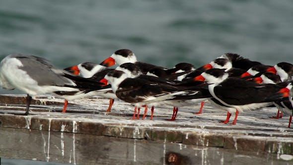 Thumbnail for Birds Wildlife Mexico 12