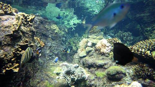 Fishtank 02