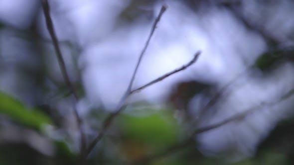 Thumbnail for Forest Jungle Vegetation 3