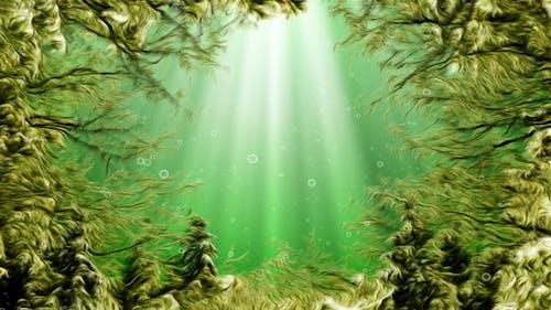 Under Water Seaweed
