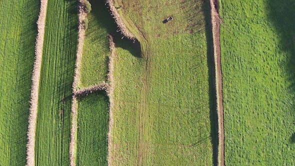 Thumbnail for Flying Over the Agricultural Green Fields