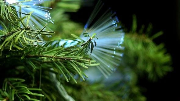 Thumbnail for Coniferous Tree with Blue Fiber Rotate