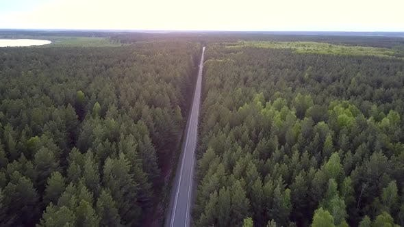Thumbnail for Bird Eye View Long Straight Road Crosses Pine Forest