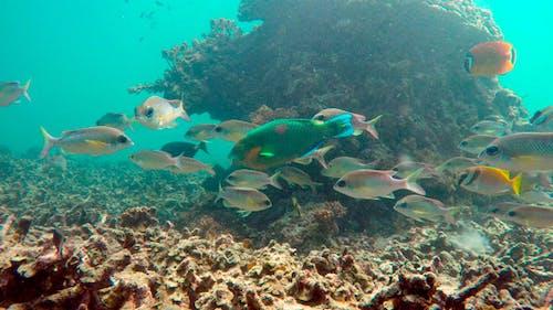 Tropic Underwater