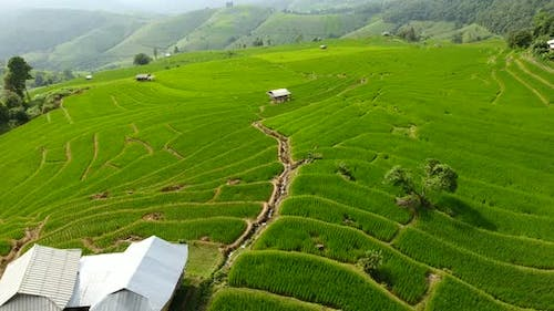 Rice Field Terrace on Mountain Agriculture Land