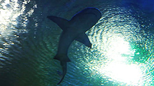 Shark is Approaching