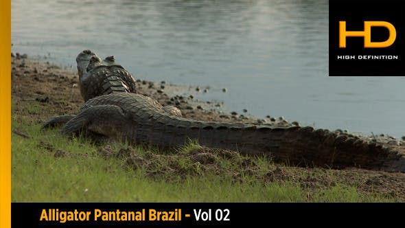 Thumbnail for Alligator Pantanal Brazil - Vol 02
