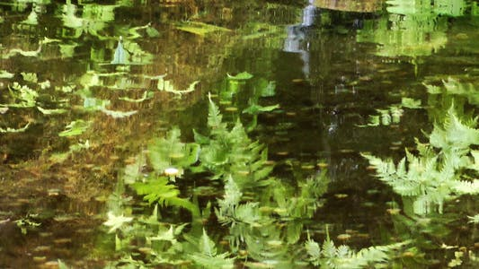 Thumbnail for Leaves Reflection on Lake Water