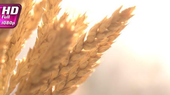 Cover Image for Golden Grain Harvest