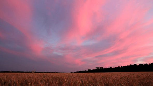 Thumbnail for Landscape With Wheat Field After Sunset