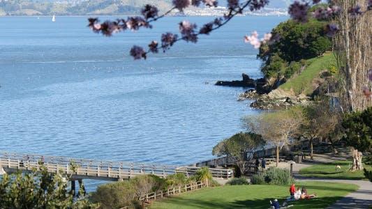 Thumbnail for Ocean Park