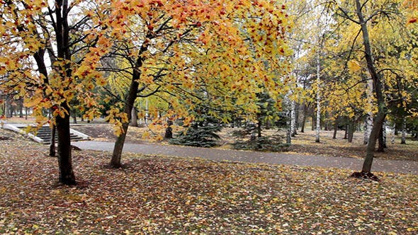 Cover Image for Autumn Park