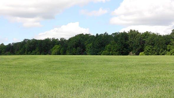 Thumbnail for Waving Green Field