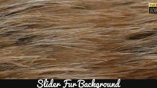 Fur Background
