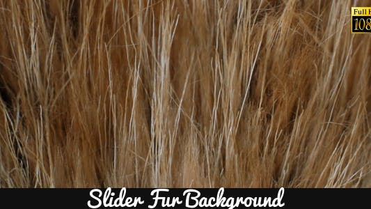 Thumbnail for Fur Background 2
