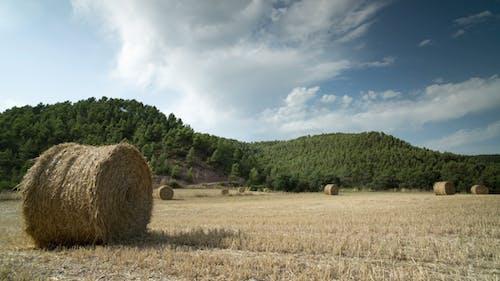 Harvest Field 1