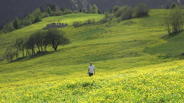 Thumbnail for Alone Woman Walks in Yellow Flowered Plateau Meadow