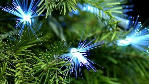 Thumbnail for Coniferous Tree with Blue Fiber