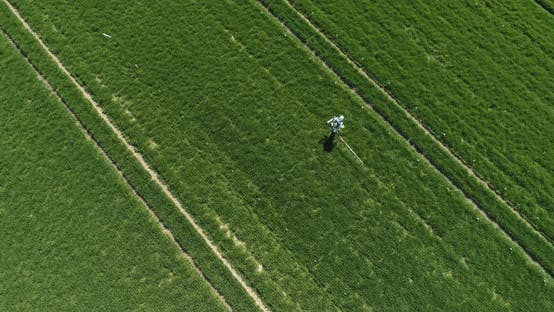 Agricultural Researcher Spraying Filed with Herbicides or Pesticides