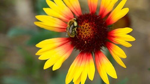Working bumblebee 1