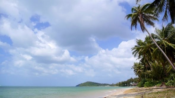 Thumbnail for Tropical Beach With Coconut Palm Trees, Blue Sky