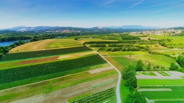 Thumbnail for Flying Over Green Agricultural Field on Sunny Day