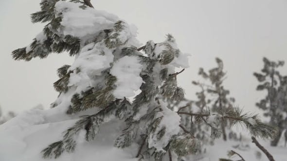 Thumbnail for Heavy Snow After Snowstorm