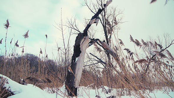 Thumbnail for Burned Tree And Dry Grass