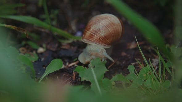 Thumbnail for Snail In The Grass