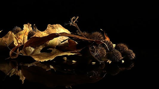 Thumbnail for Dry Autumn Leaves