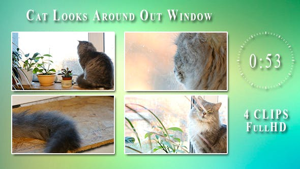 Thumbnail for Cat Looks Around Out Window (4 Items)