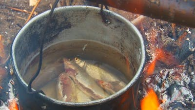 Fish Cooked in a Pot