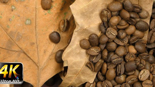 Thumbnail for Roasted Coffee and Dry Leaves 3