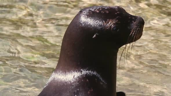 Thumbnail for Sealion Mexico Wildlife 1