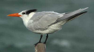 Bird Mexico Wildlife