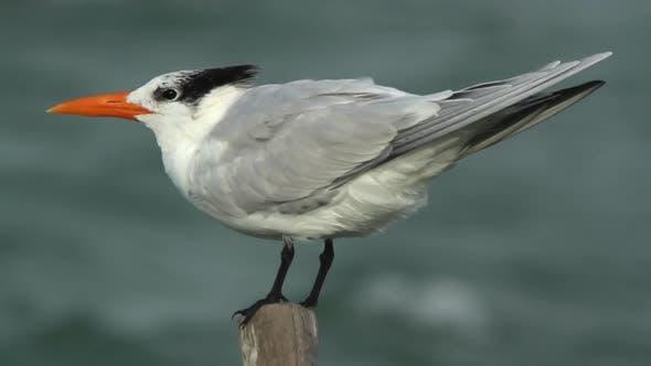 Thumbnail for Bird Mexico Wildlife