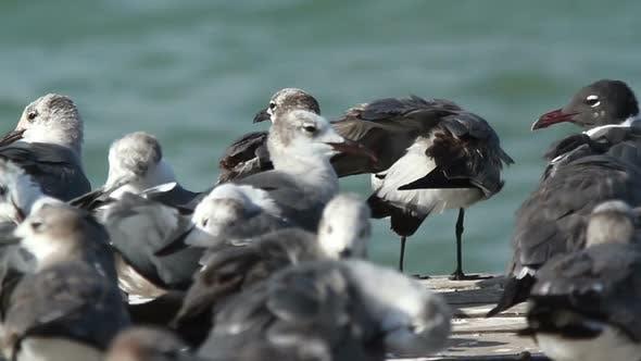 Thumbnail for Birds Wildlife Mexico 5