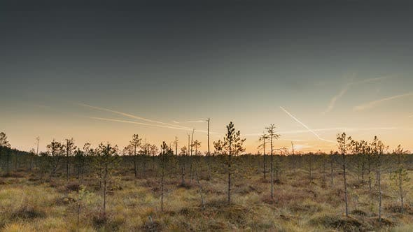 Berezinsky, Biosphere Reserve, Belarus. Autumn Dawn Landscape With Marsh Swamp During Sunset. Dark