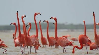 Flamingo Flock Mexico Lagoon 3