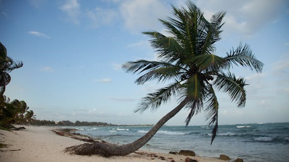 Thumbnail for Paradise Beach Palm Tree Caribbean Mexico 3